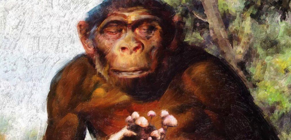 Apsinešusi beždžionė